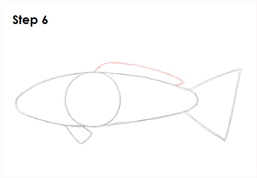 Draw Koi Fish 6