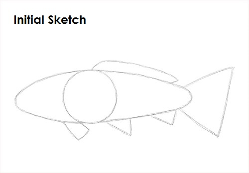 Draw Koi Fish Sketch