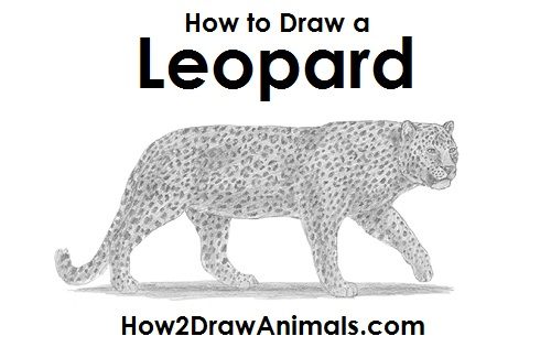 step by step how to draw a leopard