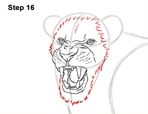 roaring lion drawing step by step
