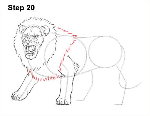 Draw roaring lion 20
