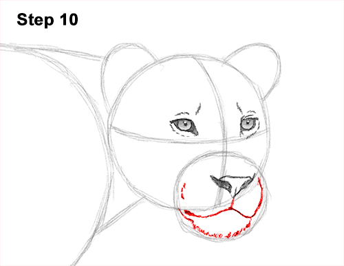 Draw Female Lion 10