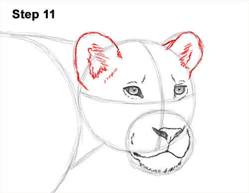 Draw Female Lion 11