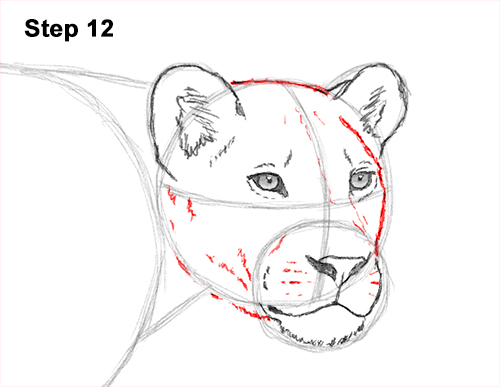 Draw Female Lion 12