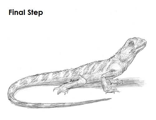 Line Drawing Lizard : How to draw a lizard