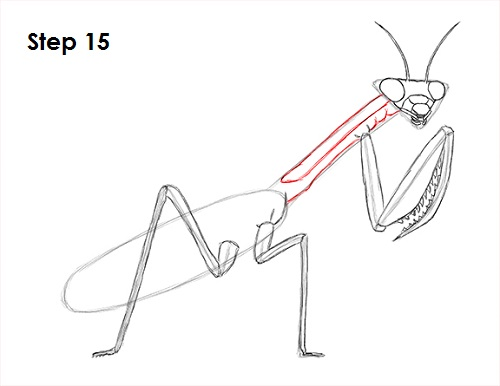 Draw Praying Mantis 15
