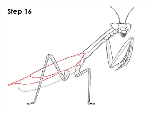 Draw Praying Mantis 16