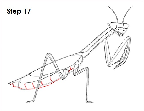 Draw Praying Mantis 17