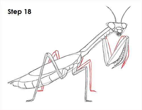 Draw Praying Mantis 18
