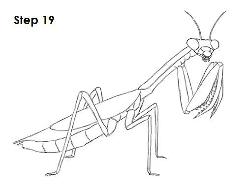 Draw Praying Mantis 19