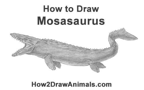 How to Draw a Mosasaurus Dinosaur Jurassic