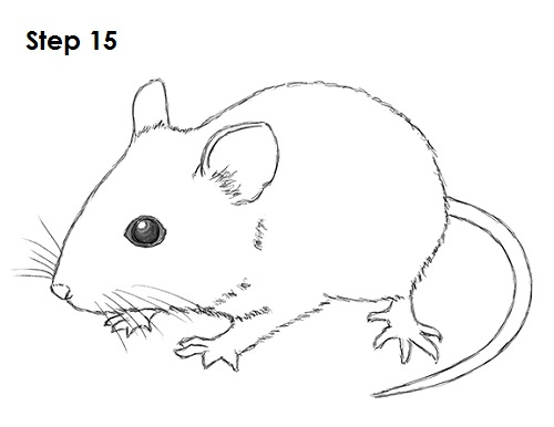 Image gallery mouse drawing images for How to draw with a mouse