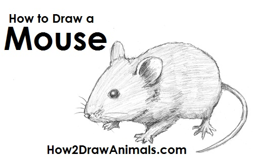 Learn To Draw Baseball Pitcher moreover Mice Easy Sketch Templates in addition Mouse Clip Art Black And White further Birds Coloring Page 25 furthermore Raton Dibujo IyEa7XeR6. on drawings of mice