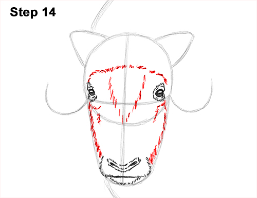 How to Draw Musk Ox Standing Horns 14