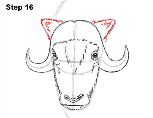 How to Draw Musk Ox Standing Horns 16