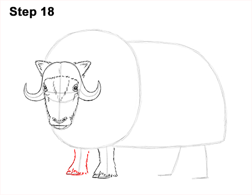 How to Draw Musk Ox Standing Horns 18