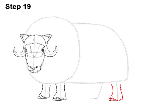 How to Draw Musk Ox Standing Horns 19