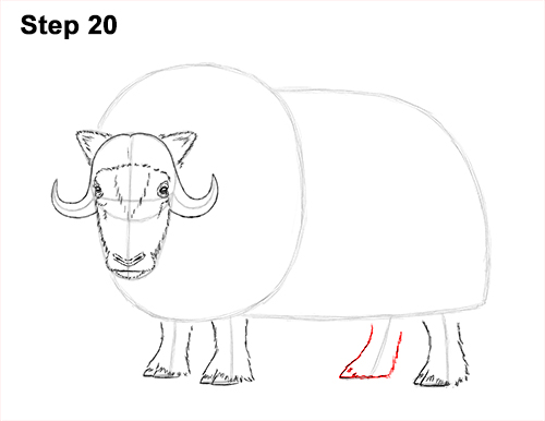 How to Draw Musk Ox Standing Horns 20