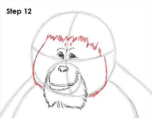 Drawing Hairlines : How to draw an orangutan