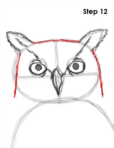 Draw Great Horned Owl 12