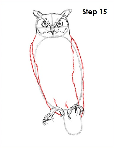 Draw Great Horned Owl 15