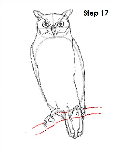 how to draw an owl great horned Owl Sketches draw great horned owl 17