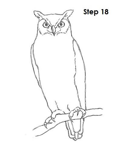 Draw Great Horned Owl 18