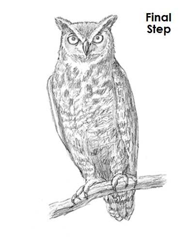Great Horned Owl Sketches Images