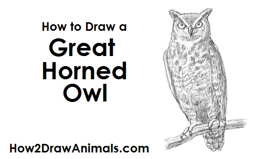 How to draw an owl great horned for Draw an owl in two steps
