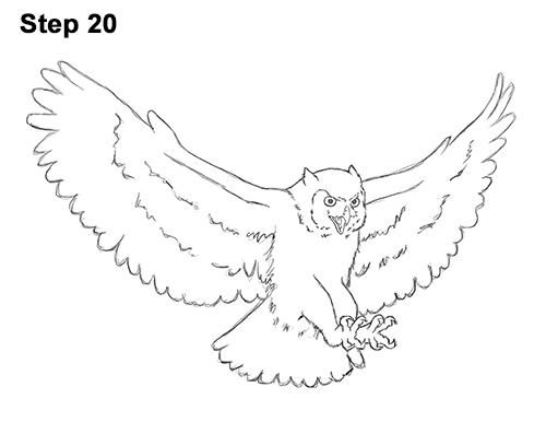 How to Draw a Great Horned Owl Flying Hunting Wings 20