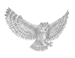 How to Draw a Great Horned Owl Flying Wings