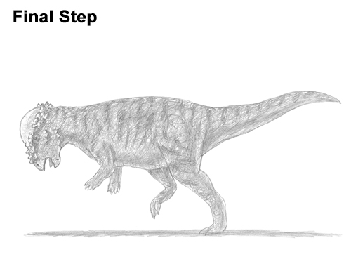 How to Draw Running Charging Pachycephalosaurus Dinosaur