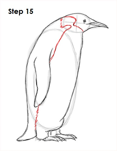 Draw Penguin 15