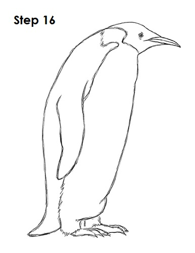 Draw Penguin 16