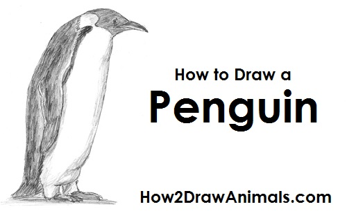 Draw Penguin