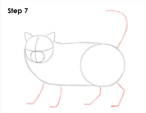 Draw Persian Cat 7