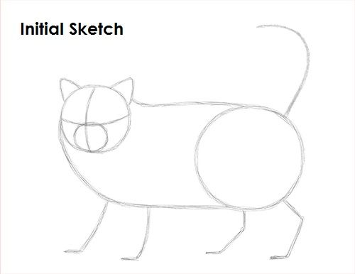 Draw Persian Cat Sketch