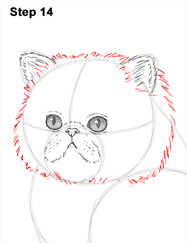 Draw Persian Kitty Cat 14