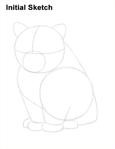 Draw Persian Kitty Cat Initial Sketch