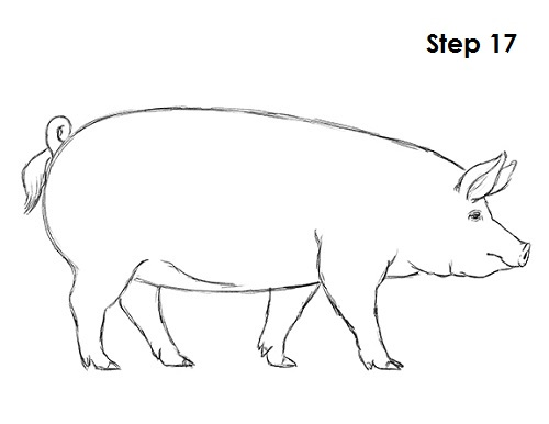 Simple Line Drawing Pig : Pig drawing pixshark images galleries with a bite