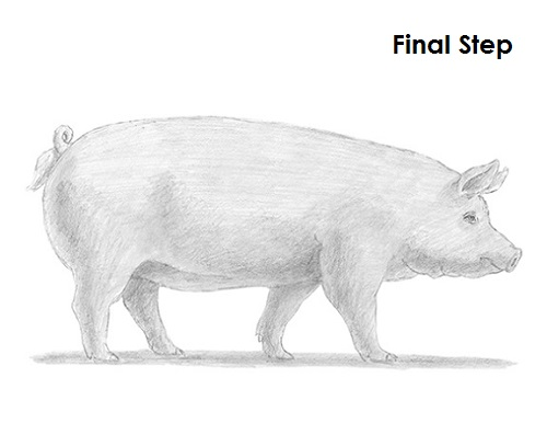 Line Drawing Pig : How to draw a pig