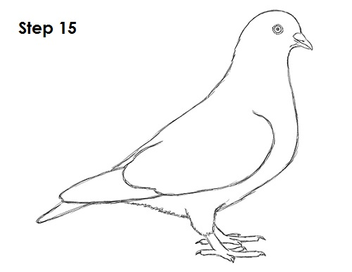 pigeon drawing related keywords  u0026 suggestions