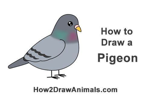 How to Draw Cute Cartoon Pigeon Bird Chibi Manga