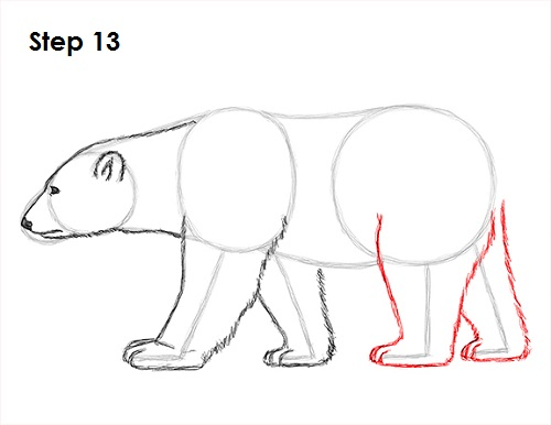 how to draw bear - photo #10