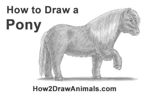 pony colt how to draw