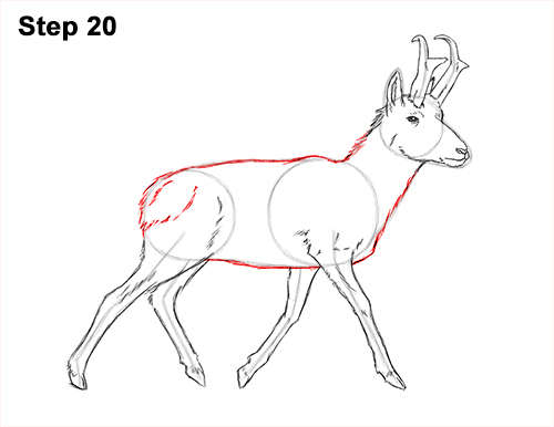 How to Draw a Pronghorn Anelope Buck Walking 20