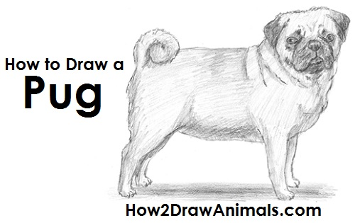 please pause the how to draw a pug video after each step to draw at your own pace