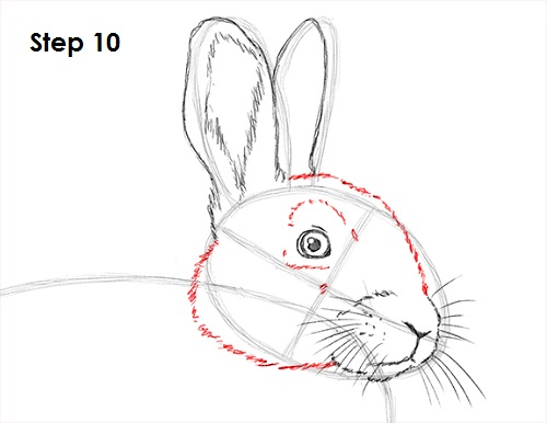 Draw Rabbit 10