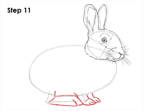 Draw rabbit 11 step