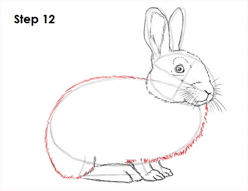 Draw Rabbit 12